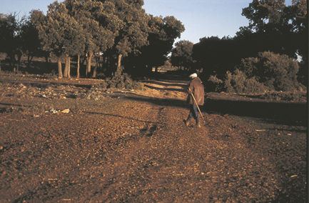 El campo de Montiel